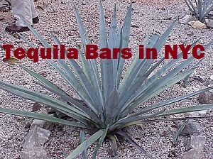 Tequila Bars in NYC